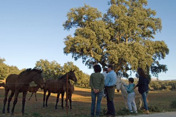 Visita Entre Toros y Caballos · Reservatauro